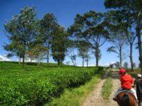 Menikmati Keindahan Wisata Agro Gunung Mas