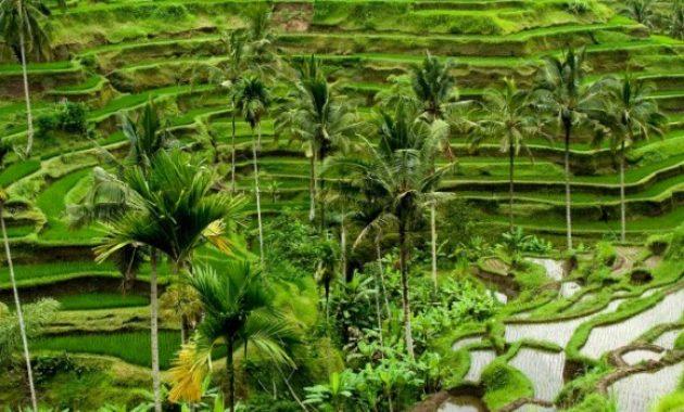 4 Daftar Wisata di Bali Beserta Harganya