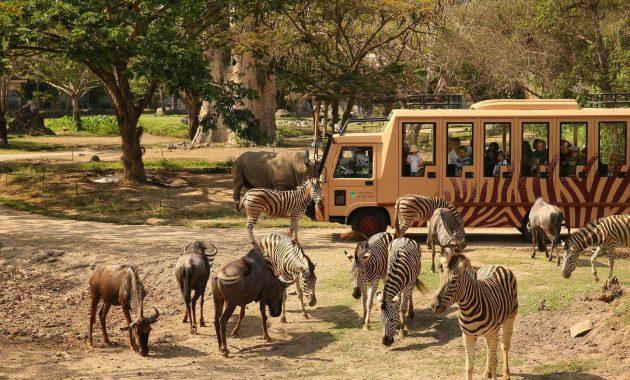 Wisata Kebun Binatang Terbaik di Indonesia