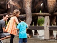 Daftar Objek Ekowisata Bali, Wisata Seru Sambil Edukasi Di Bali