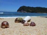 Ragam Destinasi Wisata Pantai Terindah Di Tulungagung