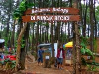 Wisata Puncak Becici, Hamparan Landscape Alam Indah Di Pucuk Pinus